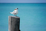 Beach holiday chairs water birds vacation coconuts people