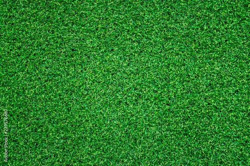 Green grass background - 229576680