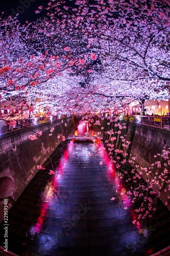中目黒・目黒川の夜桜