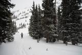 Snowshoeing - 229593829