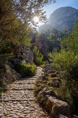 Urlaub, Mallorca, Palmen, Bananen, Wandern, Katze, Kitty, Tiere, Früchte - 229610454