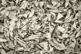 Fall dry leaves background