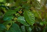 Coffee farm theme