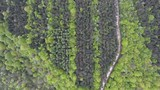 Dirt road in a hardwood and coniferous forest by drone. High altitude. Verdun - 229628603