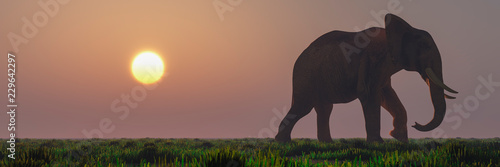 Wall mural elephant and sunset