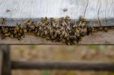 enjambre de abejas colmena amarillas con rayas naturaleza