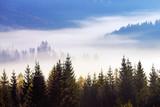 Carpathian mountain sunny landscape - 229688445