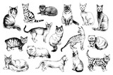 16 hand drawn cat breeds - 229691863