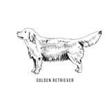 Hand Drawn Golden Retriever - 229692034