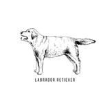 Hand drawn labrador retriever - 229692085