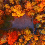 Bright autumn forest, nature from above. Aerial photo of autumn forest