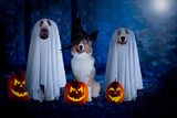 Halloween, three dogs sit disguised as ghost and witch in front of pumpkins