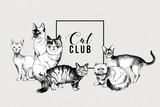 Cat club banner - 229708035
