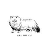 Hand drawn himalayan cat - 229708406