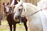 Bride and groom in forest with horses. Wedding couple with horses. - 229722034