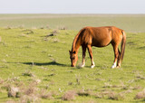 Horses in pasture on nature