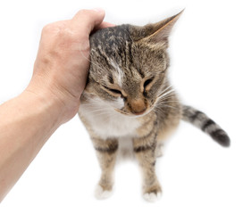 Man caresses a cat on a white background