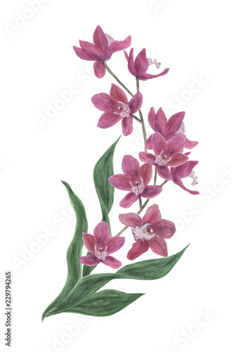 watercolor painting of orchid flowers. Design elements for wedding invintation, greeting card