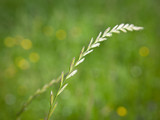 Nature in selective focus - 229820402