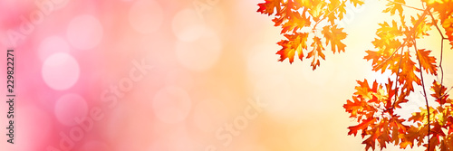 Autumn background with multi colored leaves - 229822271