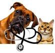 Leinwanddruck Bild - veterinarian dog and cat