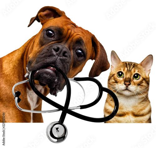Leinwanddruck Bild veterinarian dog and cat