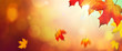 Falling Autumn Maple Leaves Natural Colorful Background With Sunlight