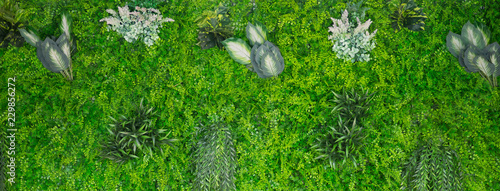 green leaves natural background wallpaper, texture of leaf, leaves with space for text  - 229856272
