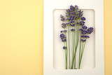 Lavender flower in white paper frame on a pale yellow background.top view, copy space.lavender season