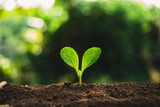 Plant Seeds Planting trees growth,The seeds are germinating on good quality soils in nature - 229882052