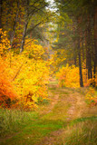 Pathway in the forest at autumn - 229886835