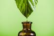 Leinwandbild Motiv essential oil dripping from leaf into glass bottle isolated on green