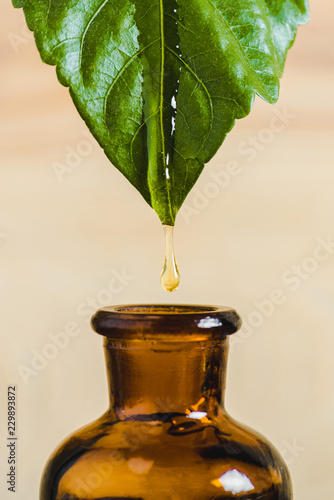 Leinwanddruck Bild essential oil dripping from leaf into glass bottle isolated on beige