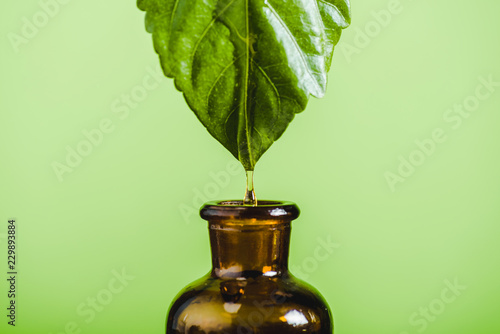 essential oil dripping from leaf into glass bottle isolated on green - 229893884