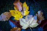 nice autumn leafs on dark stone - 229918621