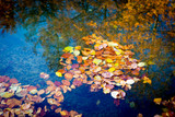 autumn foliage on lake water surface - 229918645