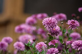Many flowers are bright purple and lilac with a blurred background