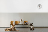 waiting room with chairs, clock and group of sitting animals - 229929057