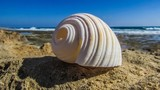 The shell is the outer skeleton of the mollusks, their fortress, which they build themselves throughout life. - 229937212