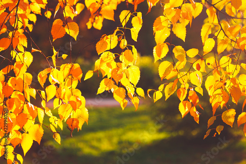 Leinwanddruck Bild Autumn leaves background in sunny day