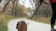 A senior man is slowly riding an electric skateboard with a dog on a leash - a paved trail with a fall scenery in northern Colorado