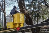 桜の木を手入れする人 - 230018004