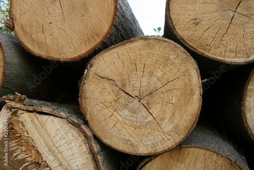 logs of wood - 230034613