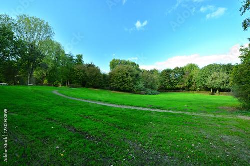 Zielona łąka wśród drzew pod niebem z białymi obłokami. - 230048898
