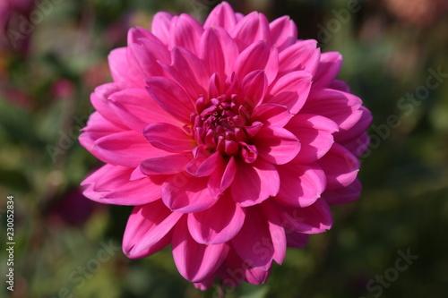 Flores varias del mundo  - 230052834