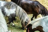 牧場のポニーのイメージ - 230053081