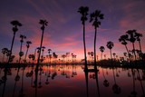 Colorful sunrise landscape with silhouettes of sugar palm trees on the rice field