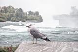 A seagull in niagara falls