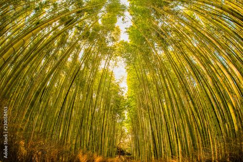 竹林のイメージ
