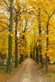Alley at fall - 230059249